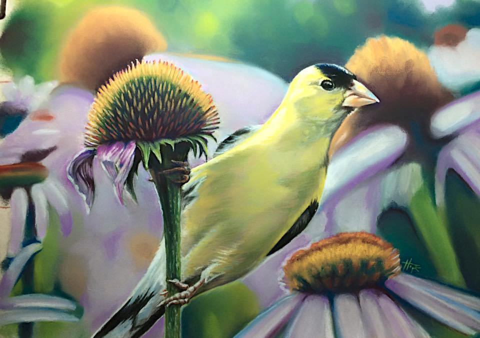 Goldfinch Feast