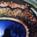 in a frog's eye - Copy - Copy