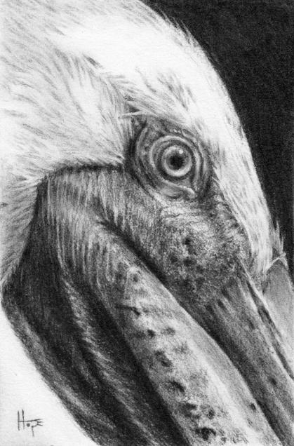 pelican low